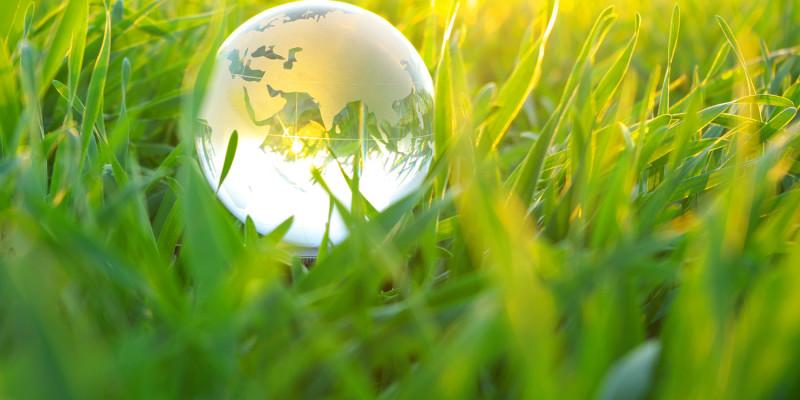 globe in  grass